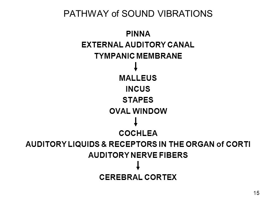 PATHWAY of SOUND VIBRATIONS