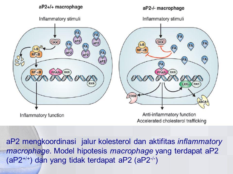 aP2 mengkoordinasi jalur kolesterol dan aktifitas inflammatory macrophage.