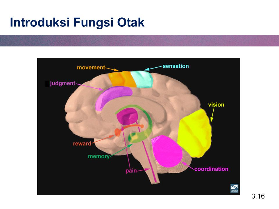 Introduksi Fungsi Otak