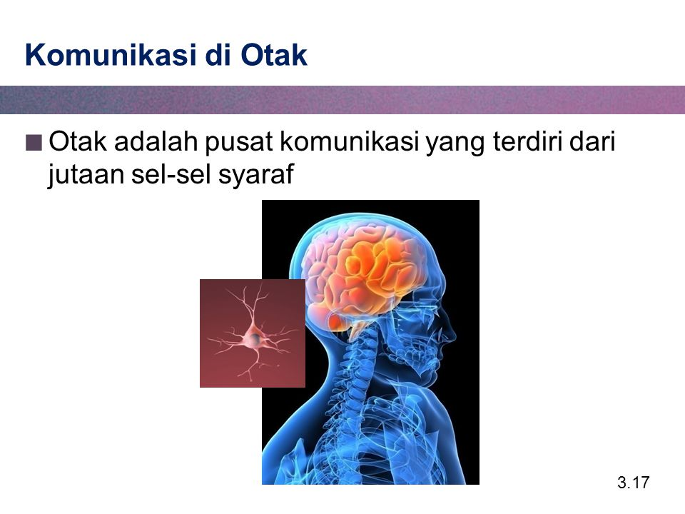 Komunikasi di Otak Otak adalah pusat komunikasi yang terdiri dari jutaan sel-sel syaraf