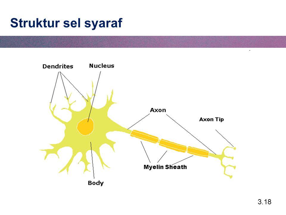 Struktur sel syaraf Myelin Sheath