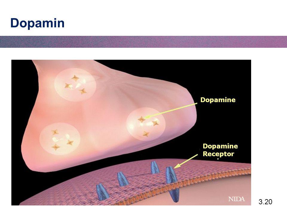 Dopamin Dopamine Dopamine Receptor
