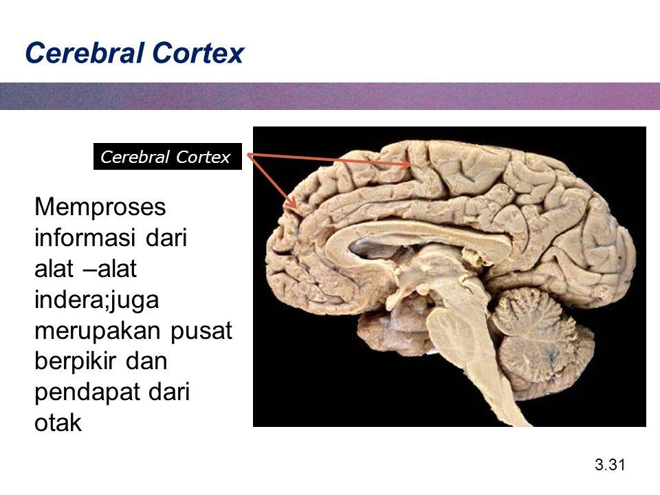 Cerebral Cortex Cerebral Cortex.