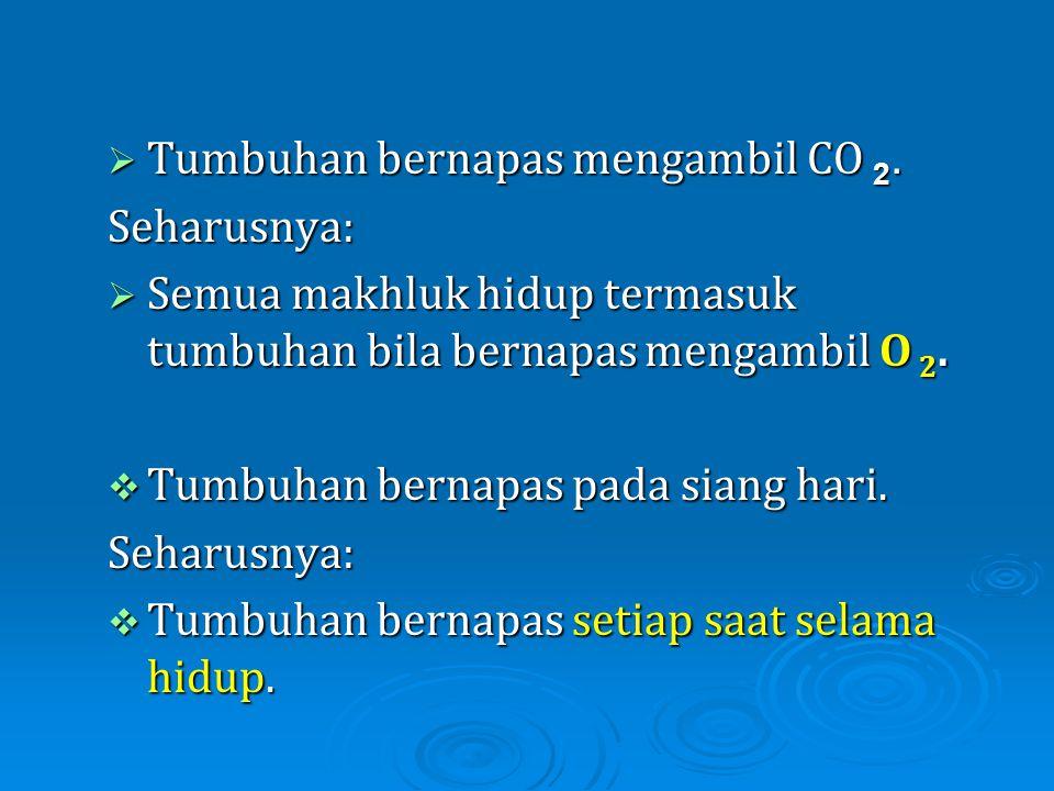 Tumbuhan bernapas mengambil CO 2.