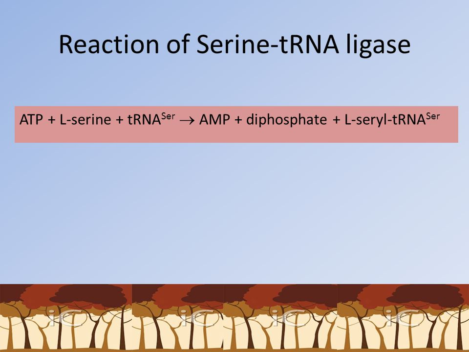 Reaction of Serine-tRNA ligase