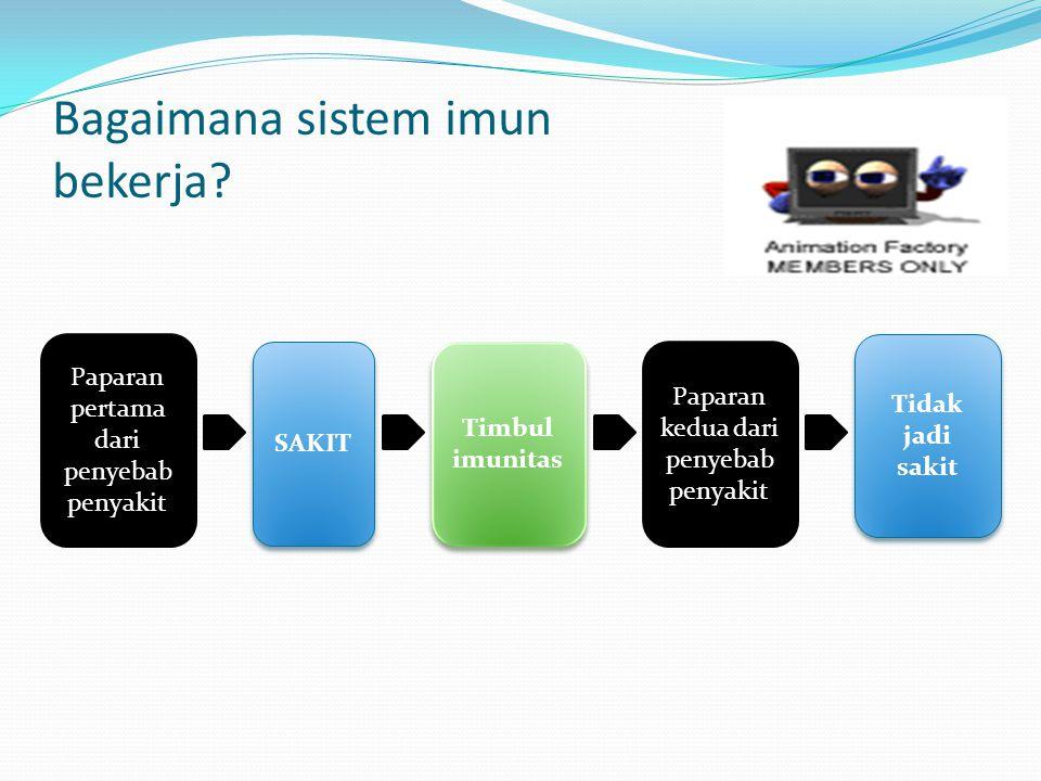 Bagaimana sistem imun bekerja