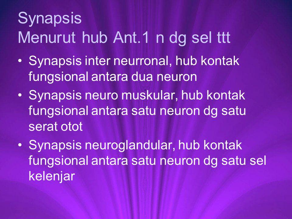 Synapsis Menurut hub Ant.1 n dg sel ttt