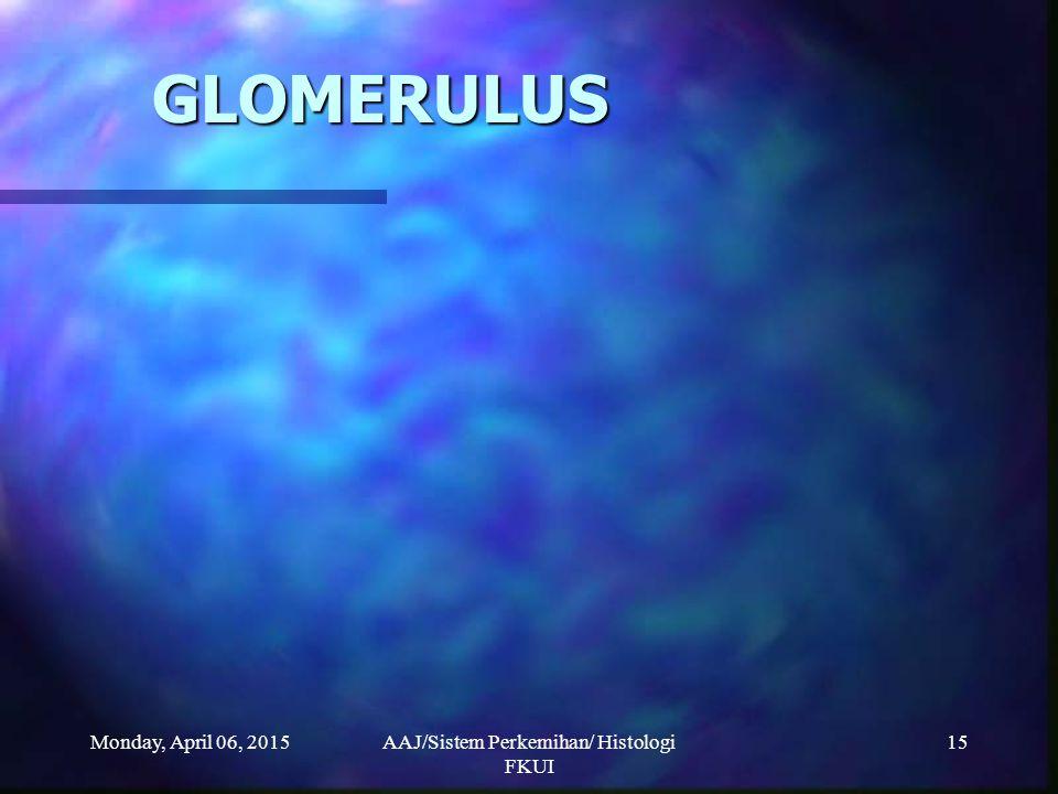AAJ/Sistem Perkemihan/ Histologi FKUI