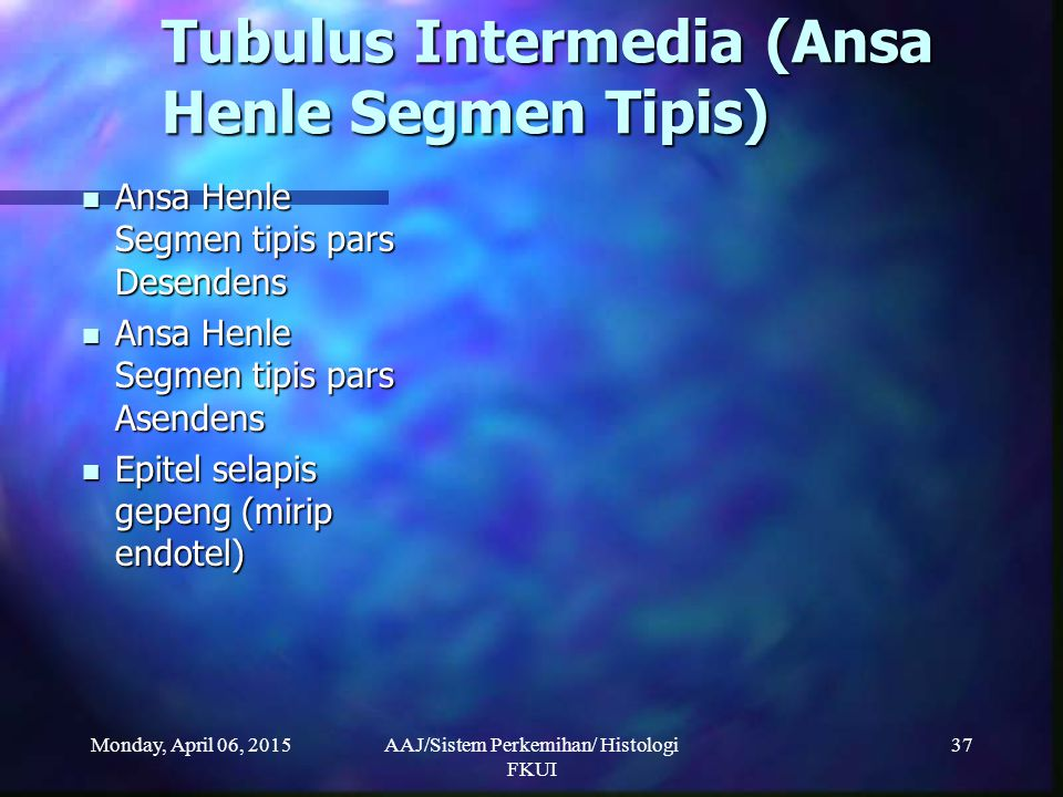 Tubulus Intermedia (Ansa Henle Segmen Tipis)