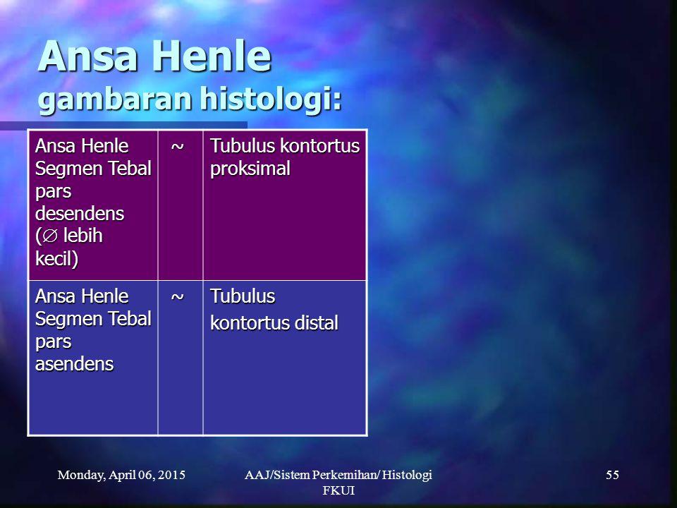 Ansa Henle gambaran histologi: