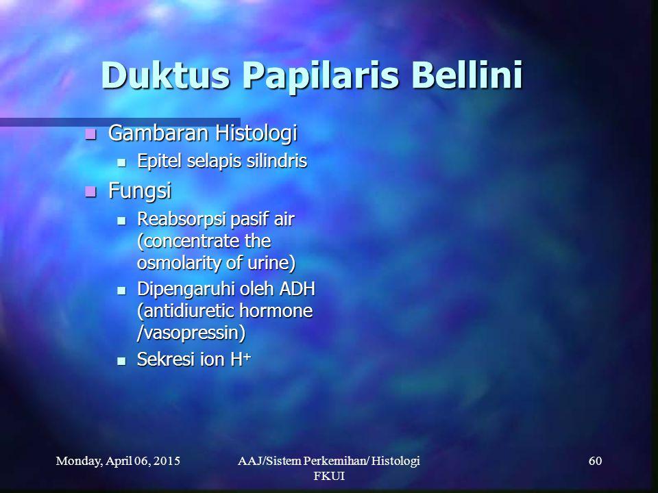 Duktus Papilaris Bellini