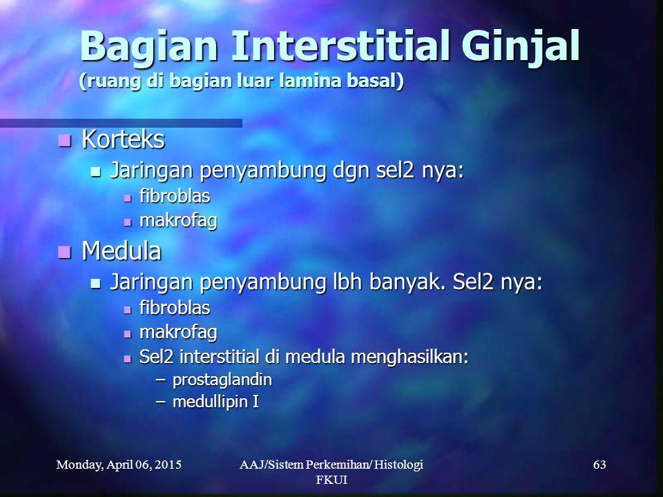 Bagian Interstitial Ginjal (ruang di bagian luar lamina basal)