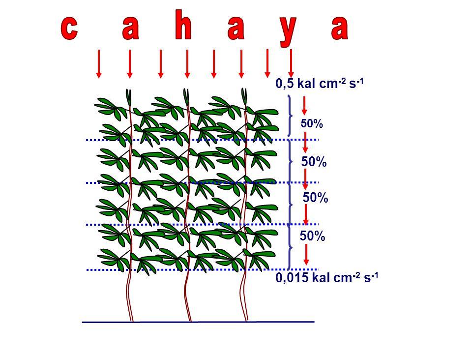 c a h a y a 0,5 kal cm-2 s-1 50% 50% 50% 50% 0,015 kal cm-2 s-1