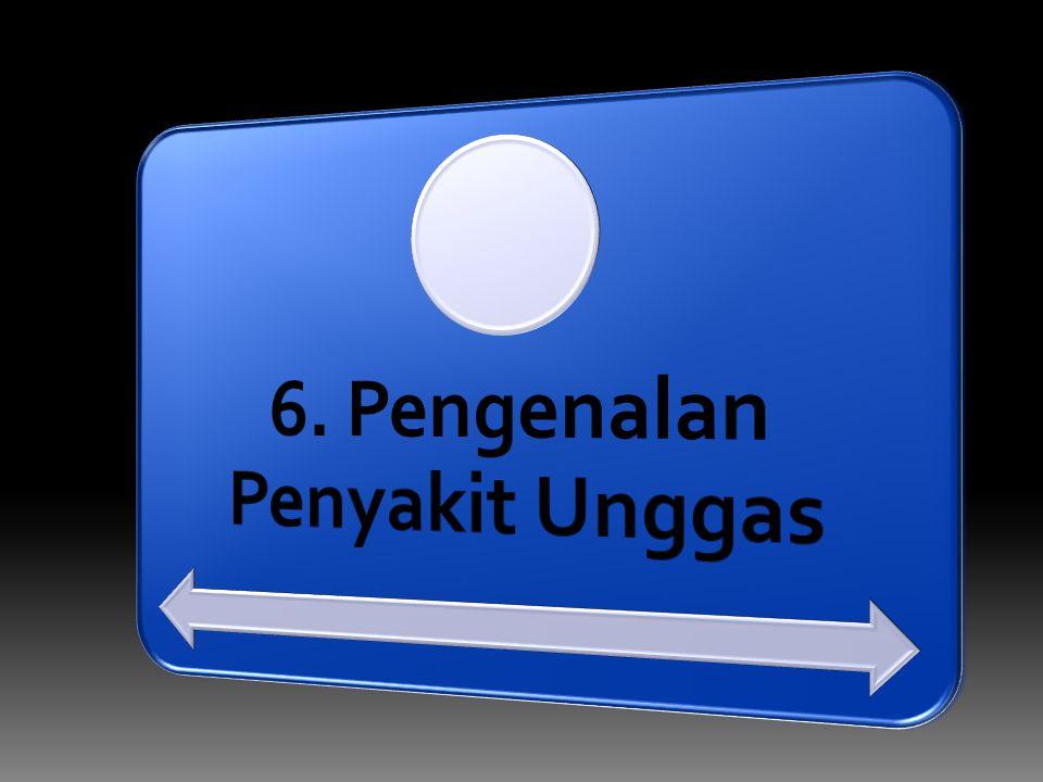 6. Pengenalan Penyakit Unggas