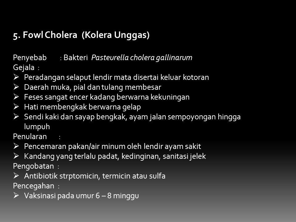5. Fowl Cholera (Kolera Unggas)