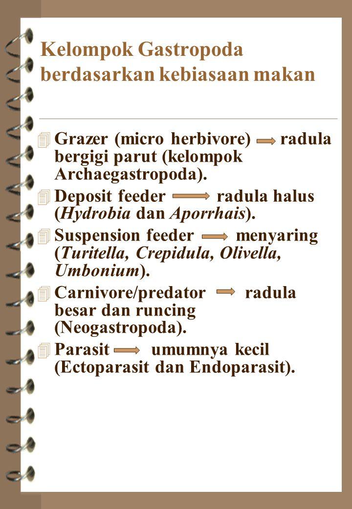 Kelompok Gastropoda berdasarkan kebiasaan makan