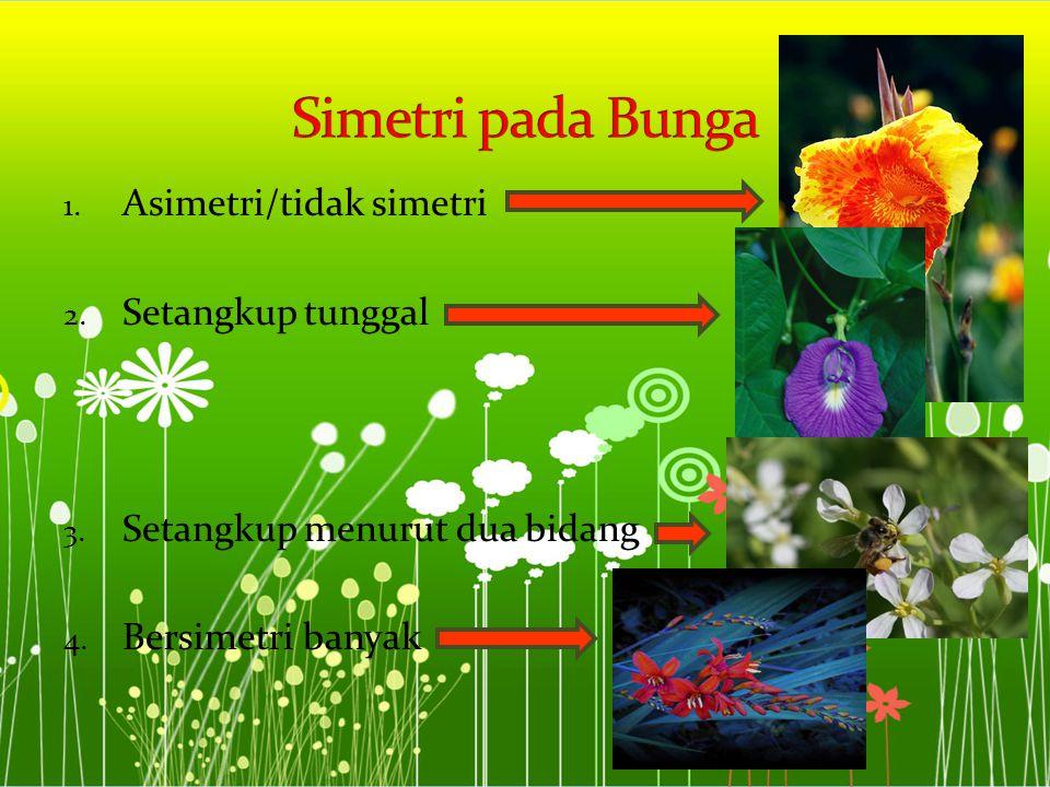Simetri pada Bunga Asimetri/tidak simetri Setangkup tunggal