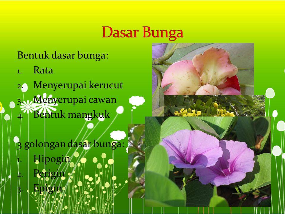 Dasar Bunga Bentuk dasar bunga: Rata Menyerupai kerucut