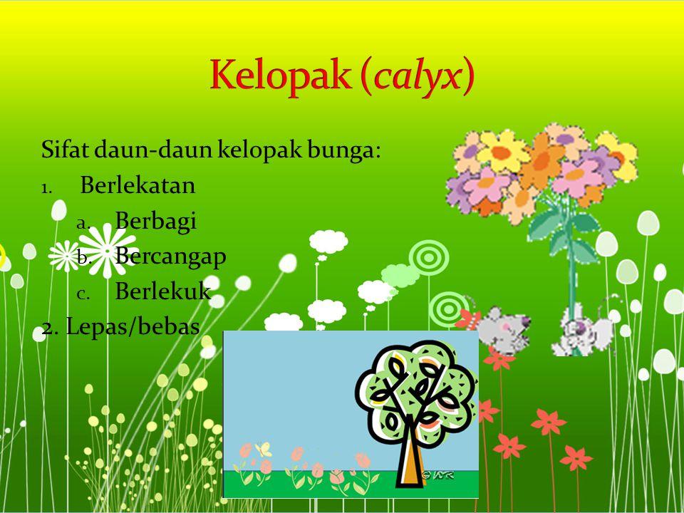 Kelopak (calyx) Sifat daun-daun kelopak bunga: Berlekatan Berbagi
