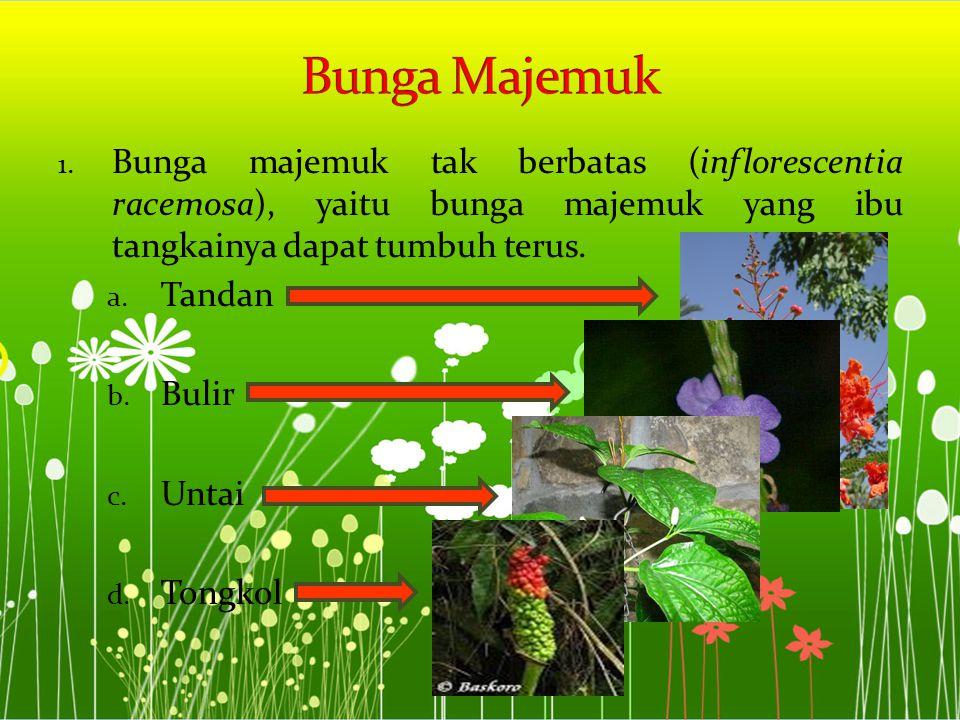 Bunga Majemuk Bunga majemuk tak berbatas (inflorescentia racemosa), yaitu bunga majemuk yang ibu tangkainya dapat tumbuh terus.