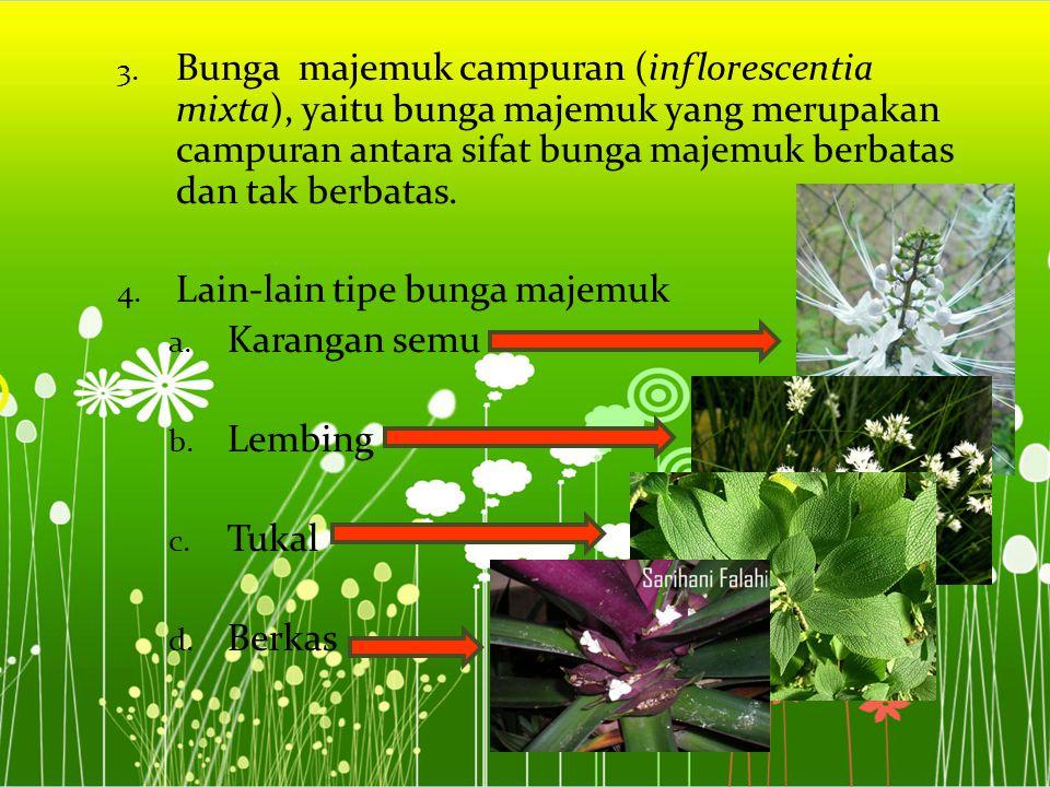 Bunga majemuk campuran (inflorescentia mixta), yaitu bunga majemuk yang merupakan campuran antara sifat bunga majemuk berbatas dan tak berbatas.