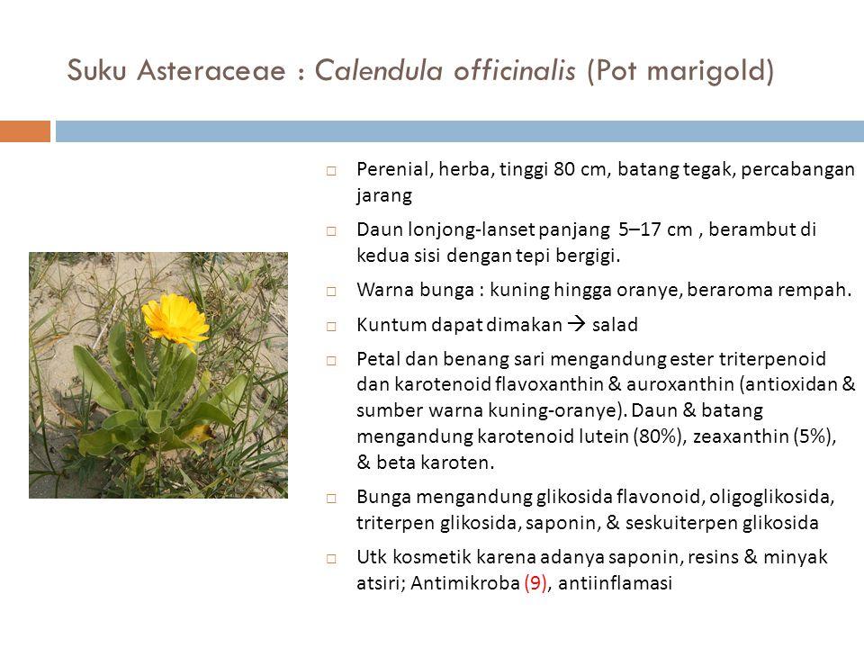 Suku Asteraceae : Calendula officinalis (Pot marigold)