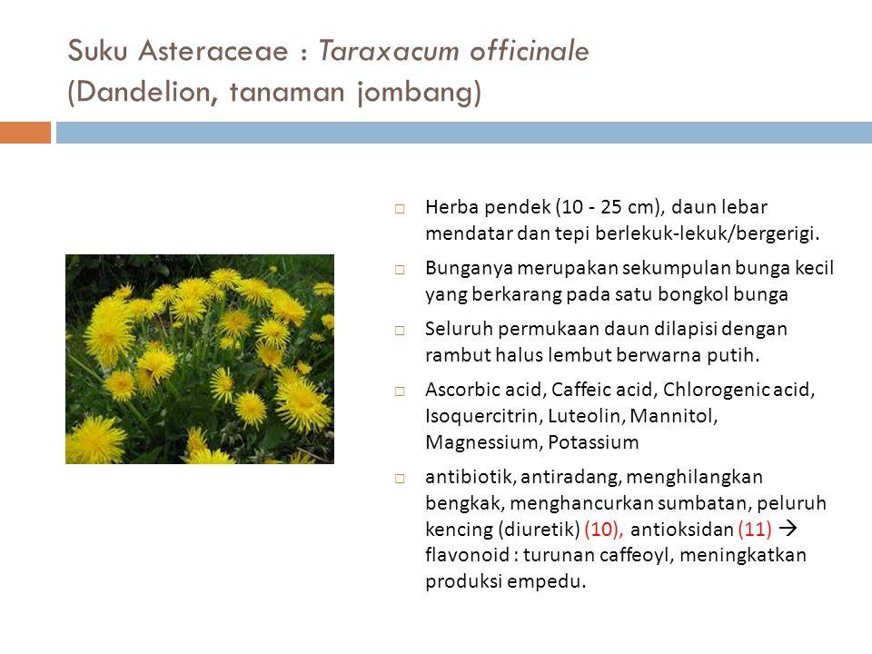 Suku Asteraceae : Taraxacum officinale (Dandelion, tanaman jombang)