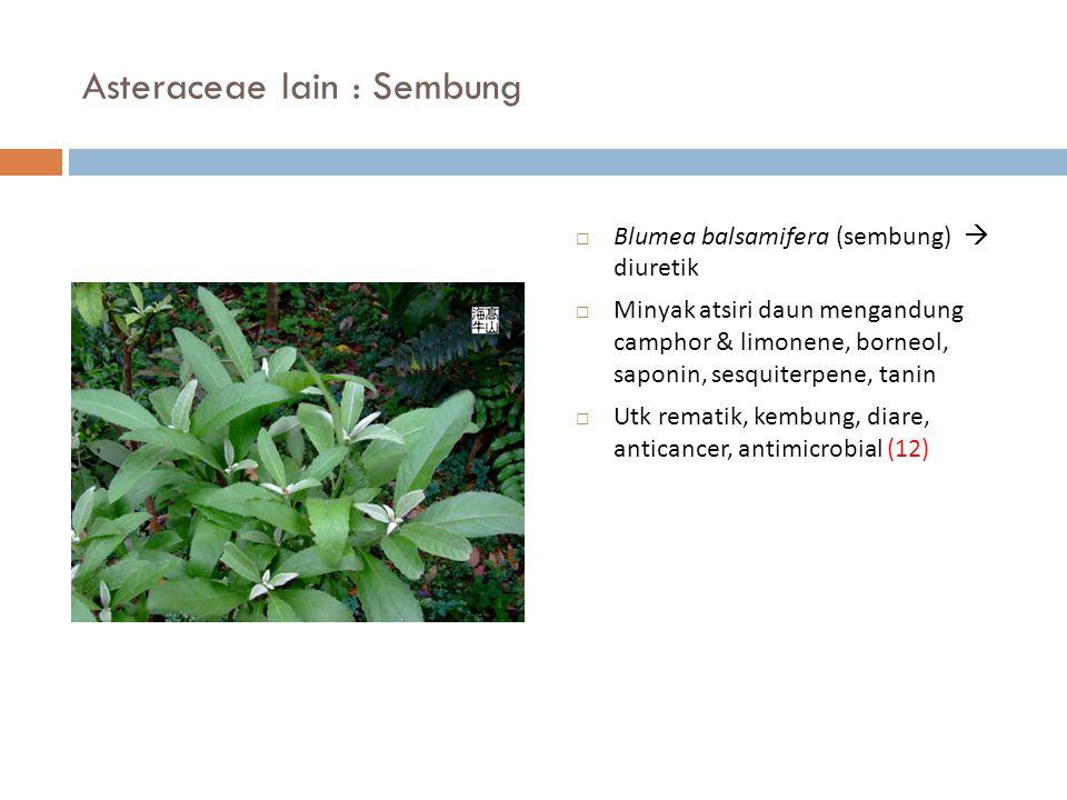 Asteraceae lain : Sembung