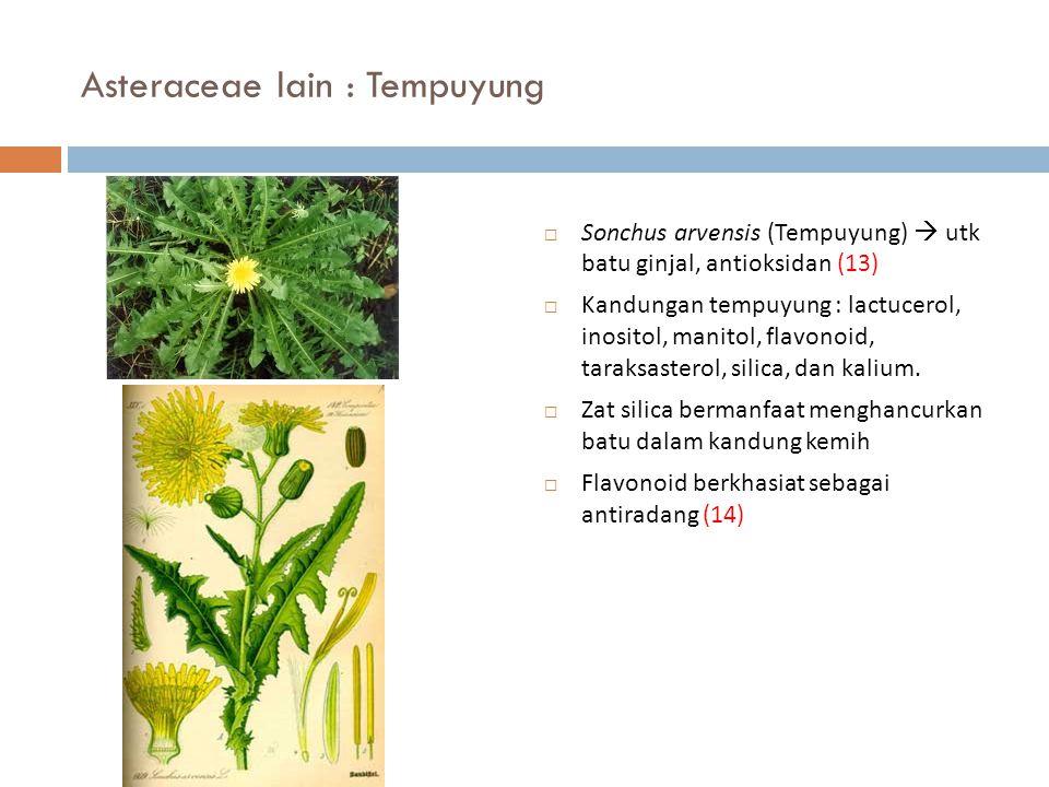 Asteraceae lain : Tempuyung