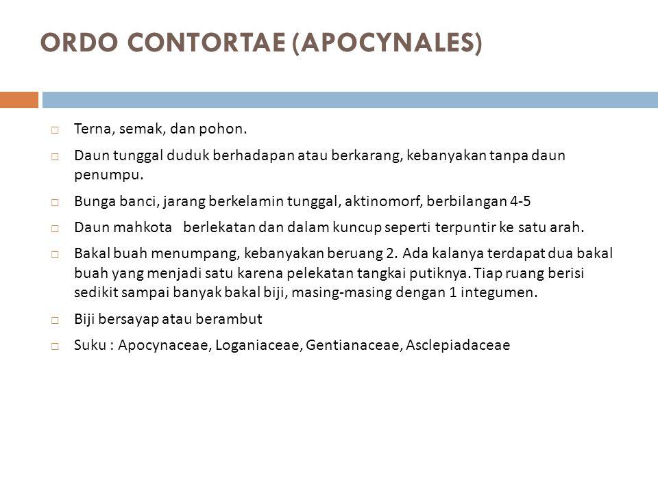 ORDO CONTORTAE (APOCYNALES)