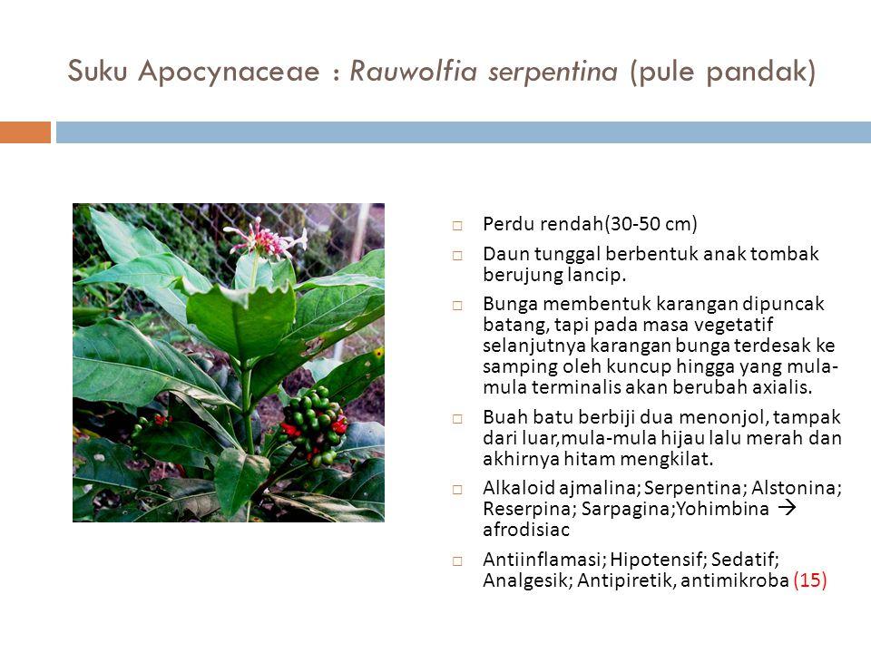 Suku Apocynaceae : Rauwolfia serpentina (pule pandak)