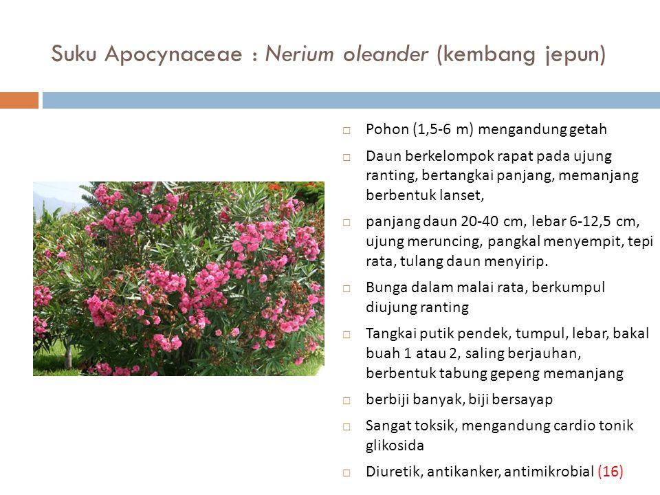 Suku Apocynaceae : Nerium oleander (kembang jepun)