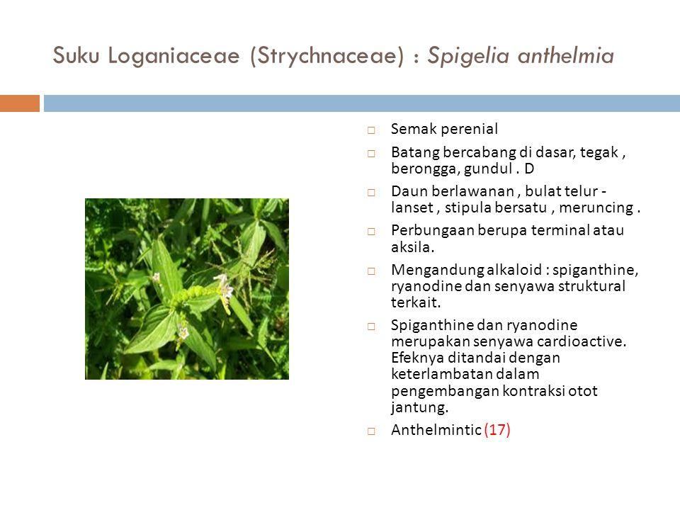 Suku Loganiaceae (Strychnaceae) : Spigelia anthelmia