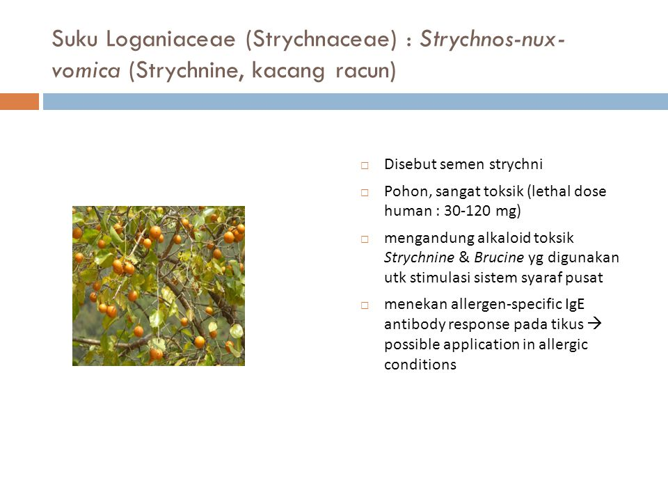 Suku Loganiaceae (Strychnaceae) : Strychnos-nux-vomica (Strychnine, kacang racun)