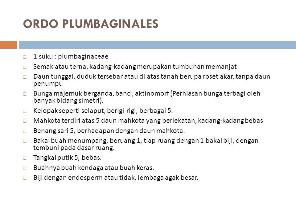 ORDO PLUMBAGINALES 1 suku : plumbaginaceae