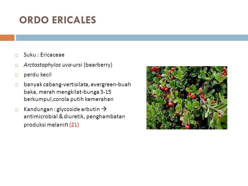 ORDO ERICALES Suku : Ericaceae Arctostaphylos uva-ursi (bearberry)