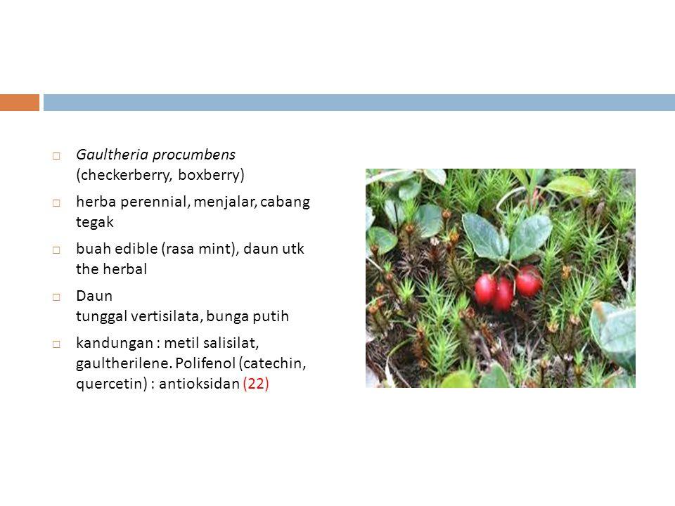 Gaultheria procumbens (checkerberry, boxberry)