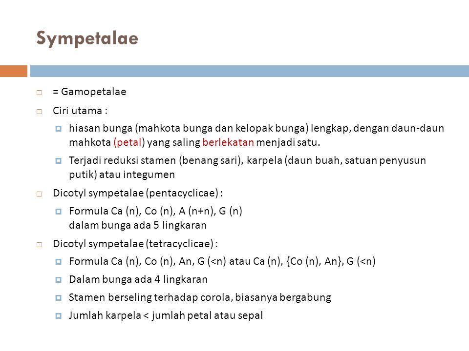 Sympetalae = Gamopetalae Ciri utama :