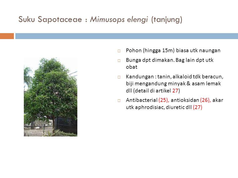 Suku Sapotaceae : Mimusops elengi (tanjung)