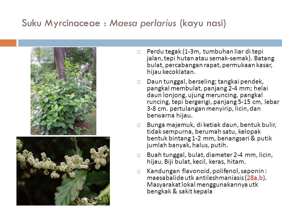 Suku Myrcinaceae : Maesa perlarius (kayu nasi)