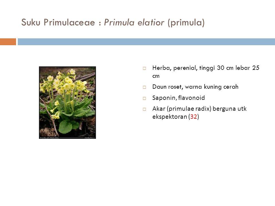 Suku Primulaceae : Primula elatior (primula)