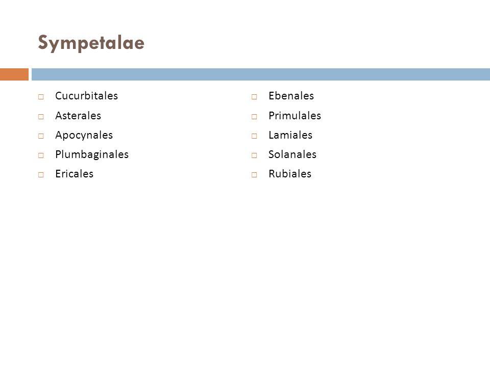 Sympetalae Cucurbitales Ebenales Asterales Primulales Apocynales