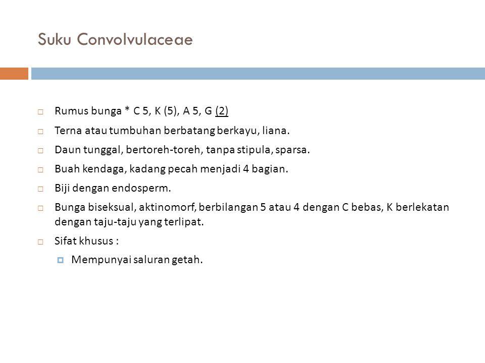 Suku Convolvulaceae Rumus bunga * C 5, K (5), A 5, G (2)