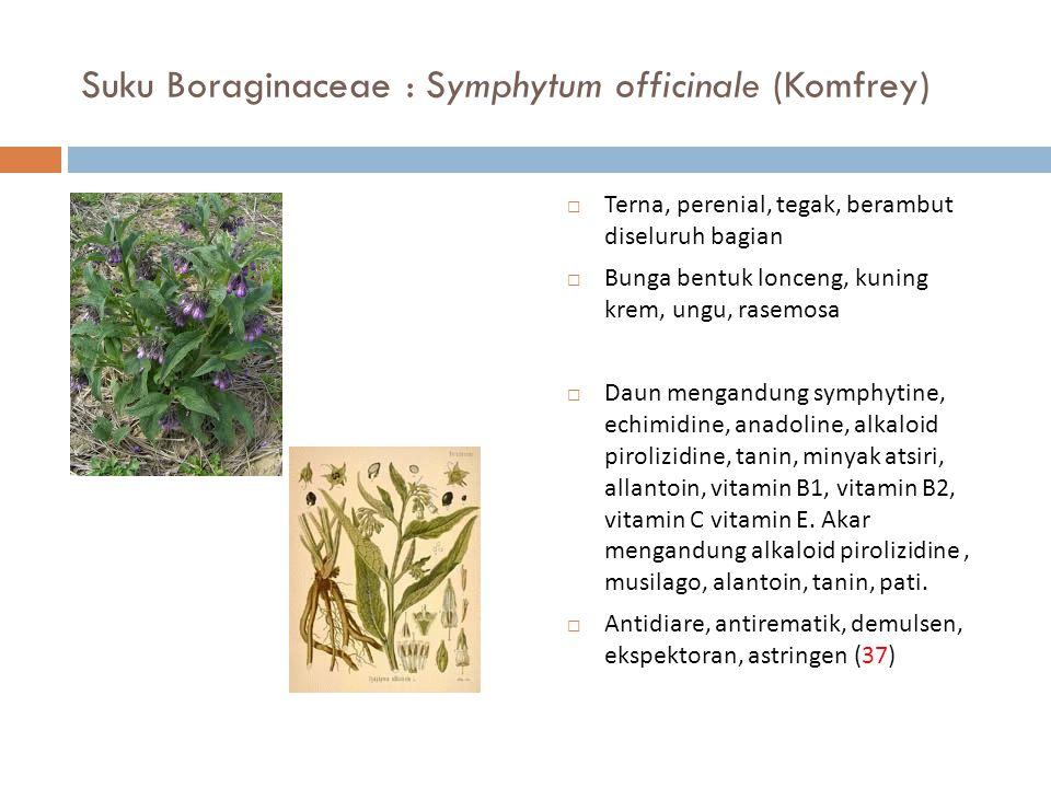 Suku Boraginaceae : Symphytum officinale (Komfrey)