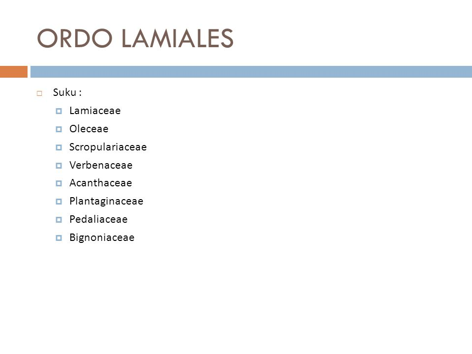 ORDO LAMIALES Suku : Lamiaceae Oleceae Scropulariaceae Verbenaceae
