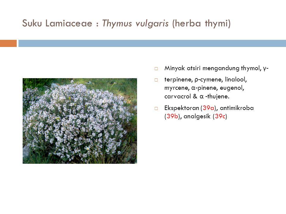Suku Lamiaceae : Thymus vulgaris (herba thymi)
