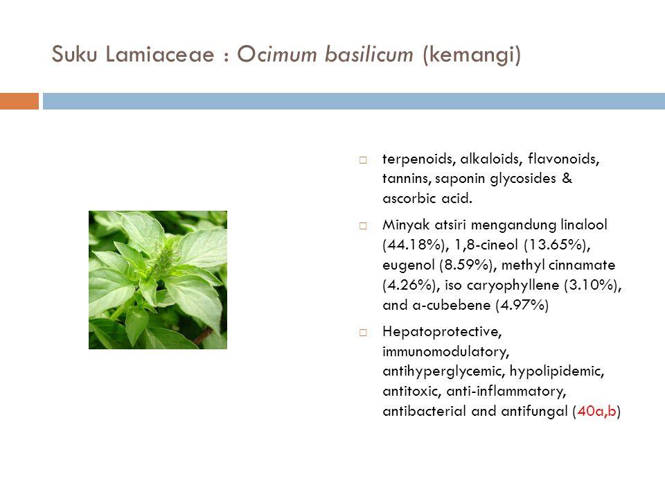 Suku Lamiaceae : Ocimum basilicum (kemangi)