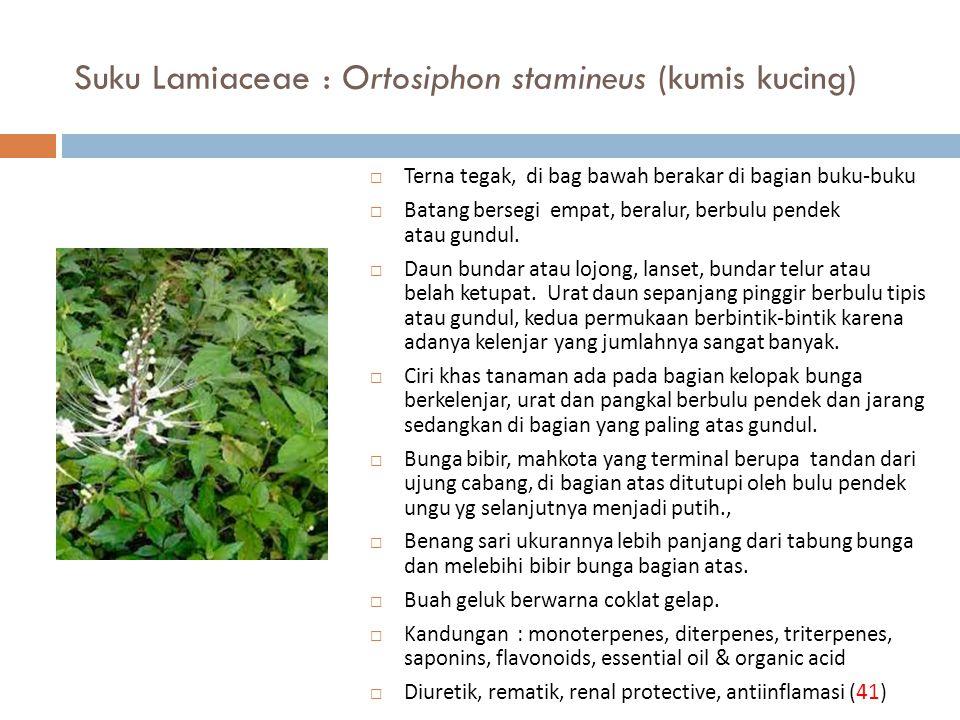 Suku Lamiaceae : Ortosiphon stamineus (kumis kucing)
