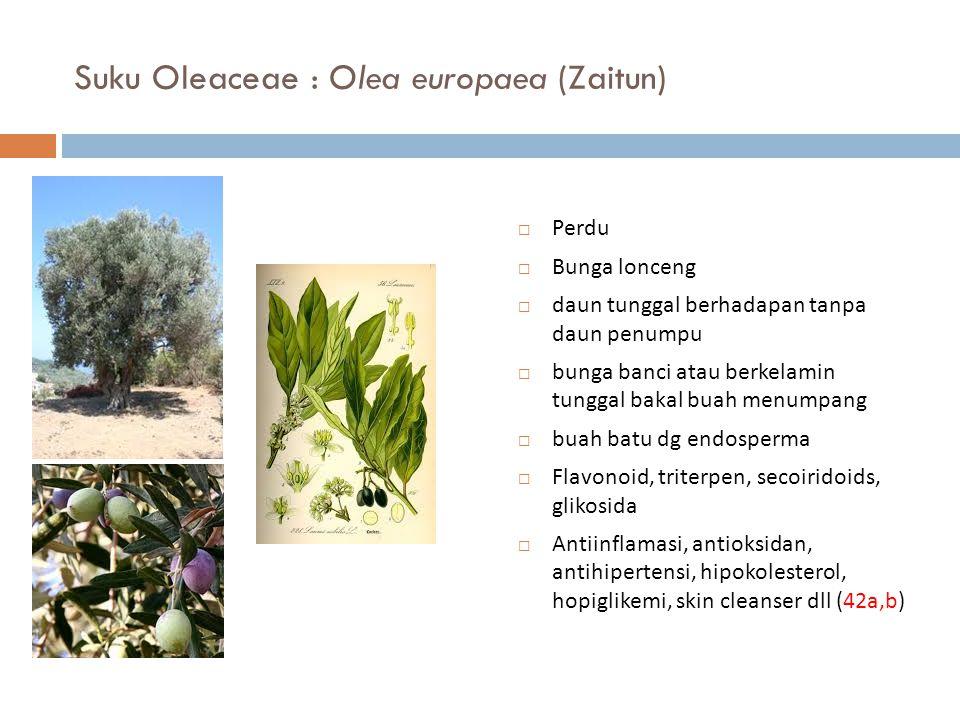Suku Oleaceae : Olea europaea (Zaitun)