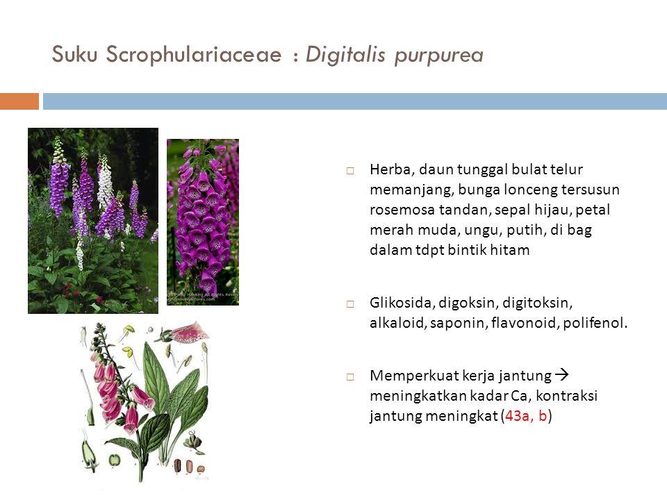 Suku Scrophulariaceae : Digitalis purpurea